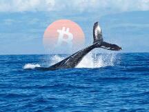 比特币巨鲸抛售趋势减速,近18万枚比特币在过去一周被交易