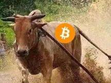 熊市不赚钱就算了,比特币牛市飙涨却还是不赚钱!问题出在哪?