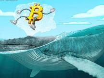 数据显示:自圣诞节以来,比特币鲸鱼的购买力度加大
