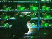 """比特大陆停止向中国大陆地区发货 虚拟币""""挖矿""""面临更大力度清理"""