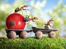 蚂蚁集团与CCF「面向区块链等前沿科技领域」成立科研基金