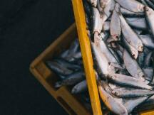 Trace Protocol用区块链改变海洋产业生态