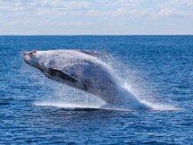 近一个半月3次天量借币做空,巨鲸赚钱了吗?