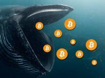 在哪寻找比特币鲸鱼?