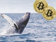 巨人押注!比特币正在等待古根海姆投资的5亿美元