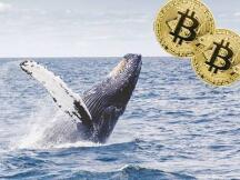 进军加密货币业务!富途和老虎证券申请海外牌照