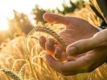 区块链+农业,如何升级农业价值链