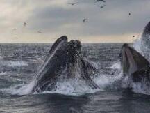 "Coindesk:自减半以来,比特币""鲸鱼""数量上升了2%"