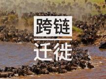 跨链迁徙:DeFi项目的抄袭对象们