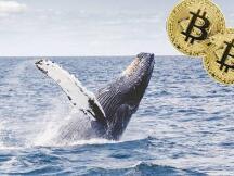 加密冰与火:交易量跌至2021年最低水平 巨鲸持续囤积BTC