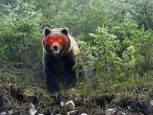 熊市反弹下的抄底,或许终将被无情埋没