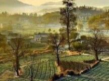 对话黄孙权、MetaDAO:在元宇宙复现「乡建中国」
