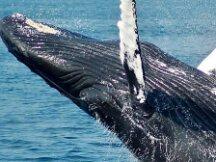"""""""鲸鱼""""助推下 欧洲正迅速成长为新的加密中心"""