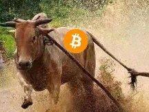 比特币重回4万美金,牛又回来了?