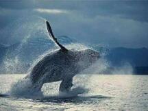 巨鲸出没之地,数字货币战场高手如何低调杀伐?