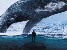 日收益近500万,这些DeFi巨鲸和投资机构都持有哪些资产?