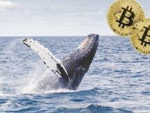 巨鲸浮出水面,三箭资本持有超过12亿美元灰度比特币信托