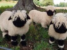 撸羊毛被反撸,Smoothy真有一套