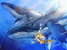 比特币鲸鱼向彭博社解释:为什么加密货币波动性将下降