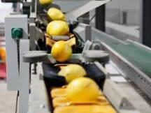 区块链农产品溯源--实现农产品全程溯源