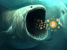 如何追踪鲸鱼?101钱包追踪指南