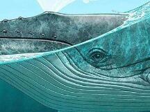 鲸鱼流入交易所的比特币数量激增,比特币将出现大幅修正?